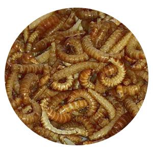 Insekten-Food