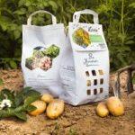 Bio Kartoffeln Blühkartoffeln