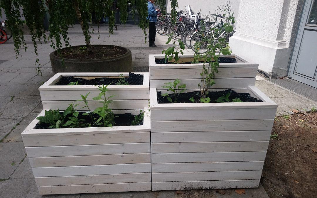 Urban Farming: unverarbeitetes Gemüse direkt aus der Natur – auch mitten in Berlin